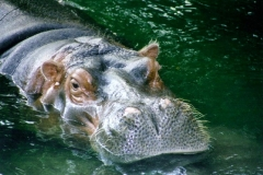 calgary-zoo-1